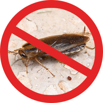 Top Shop Pest Reject Pro